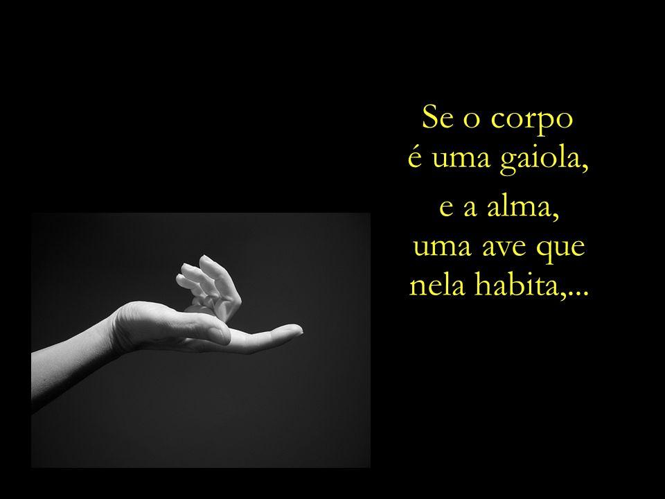 Se o corpo é uma gaiola, e a alma, uma ave que nela habita,...