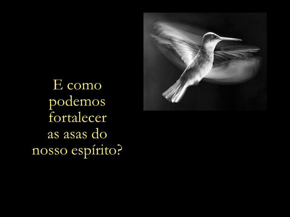 Para que no dia em que a gaiola. do nosso corpo fenecer, a ave da nossa. alma possa. voar livremente.