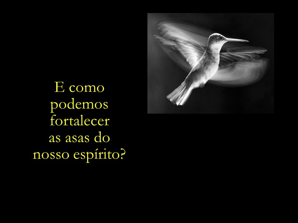 Para que no diaem que a gaiola. do nosso corpo fenecer, a ave da nossa. alma possa. voar livremente.