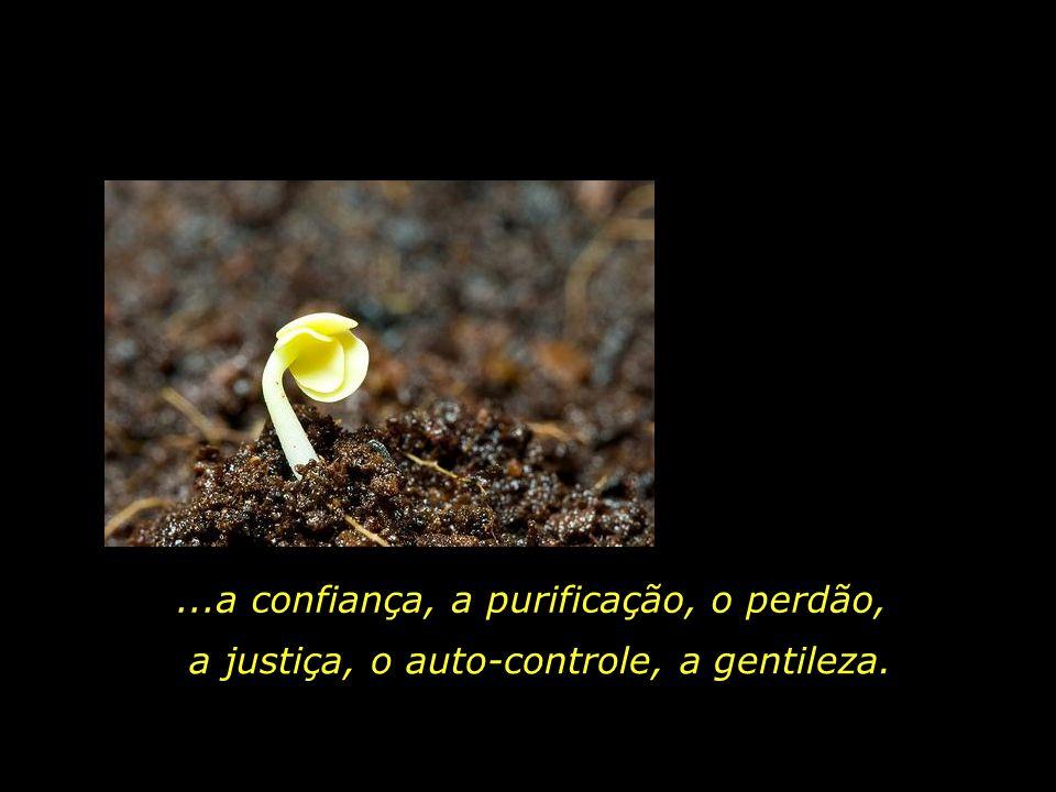 ...a confiança, a purificação, o perdão,