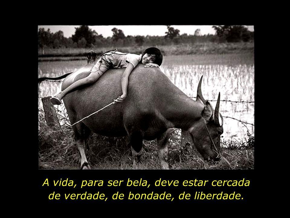 A vida, para ser bela, deve estar cercada de verdade, de bondade, de liberdade.