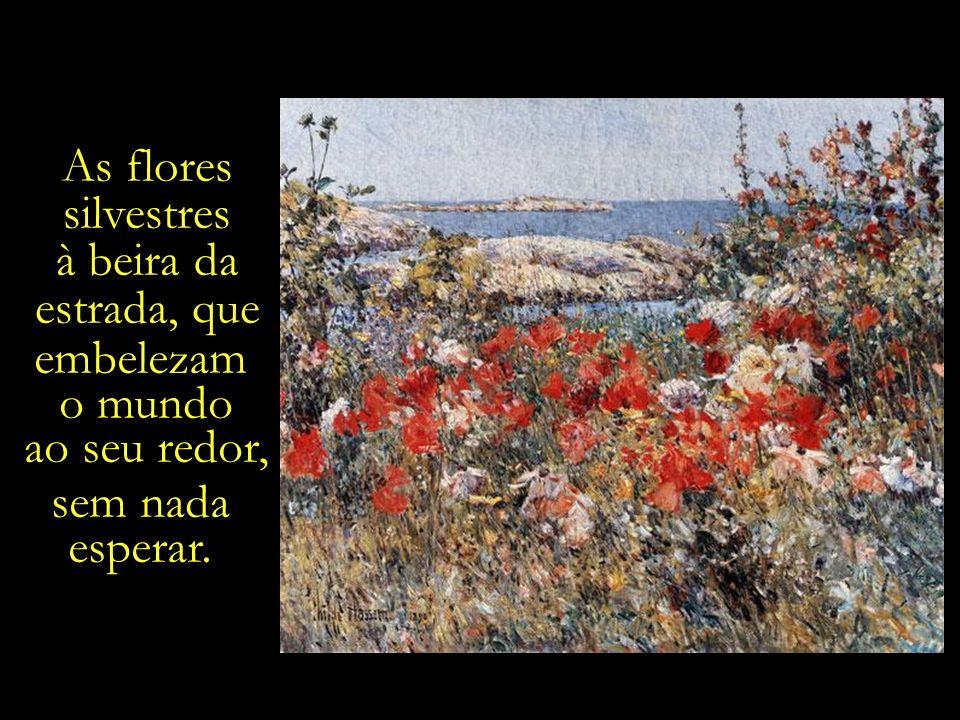 As flores silvestres à beira da estrada, que embelezam o mundo ao seu redor, sem nada esperar.