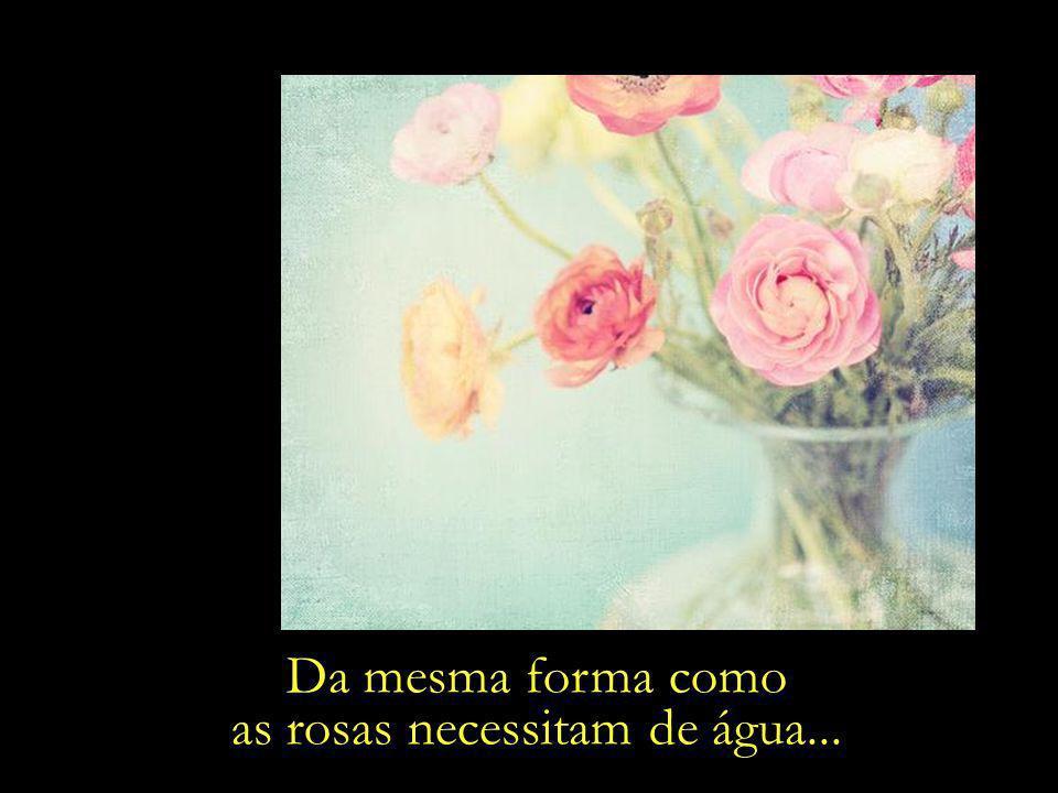 as rosas necessitam de água...