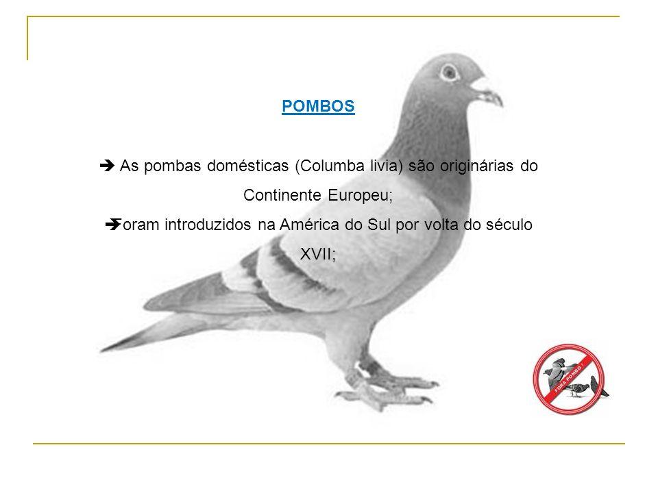Foram introduzidos na América do Sul por volta do século XVII;