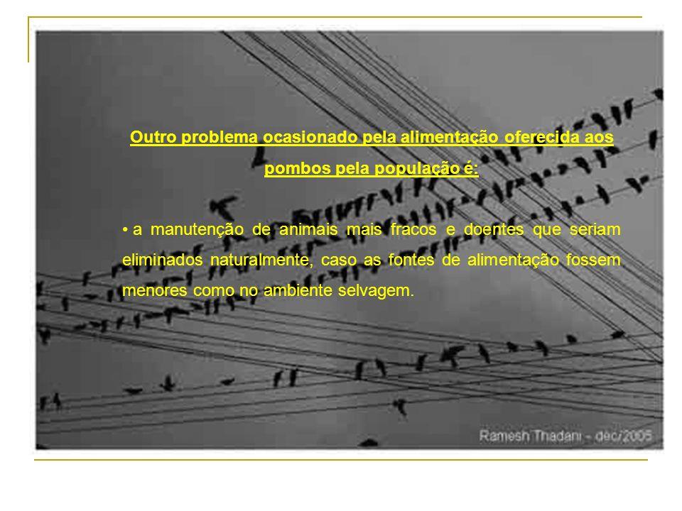Outro problema ocasionado pela alimentação oferecida aos pombos pela população é: