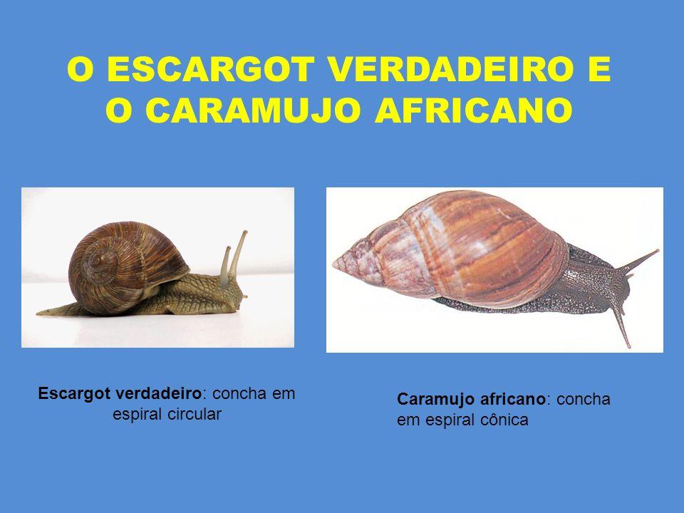 O ESCARGOT VERDADEIRO E O CARAMUJO AFRICANO