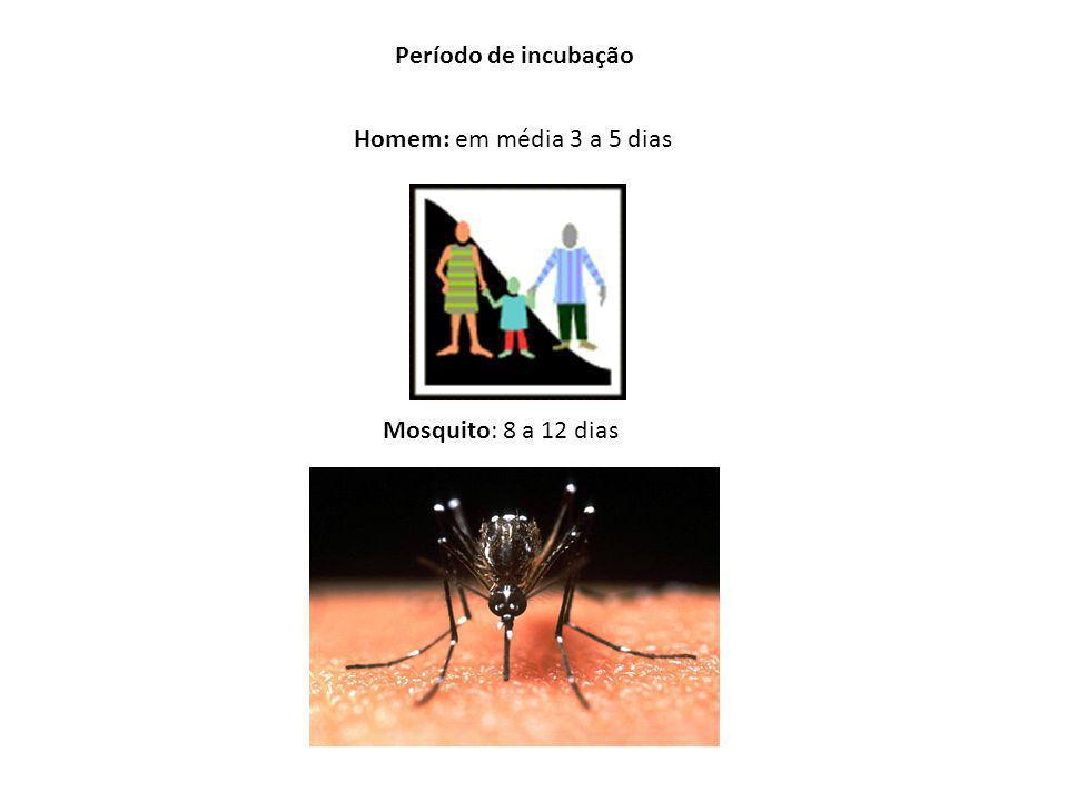 Período de incubação Homem: em média 3 a 5 dias Mosquito: 8 a 12 dias