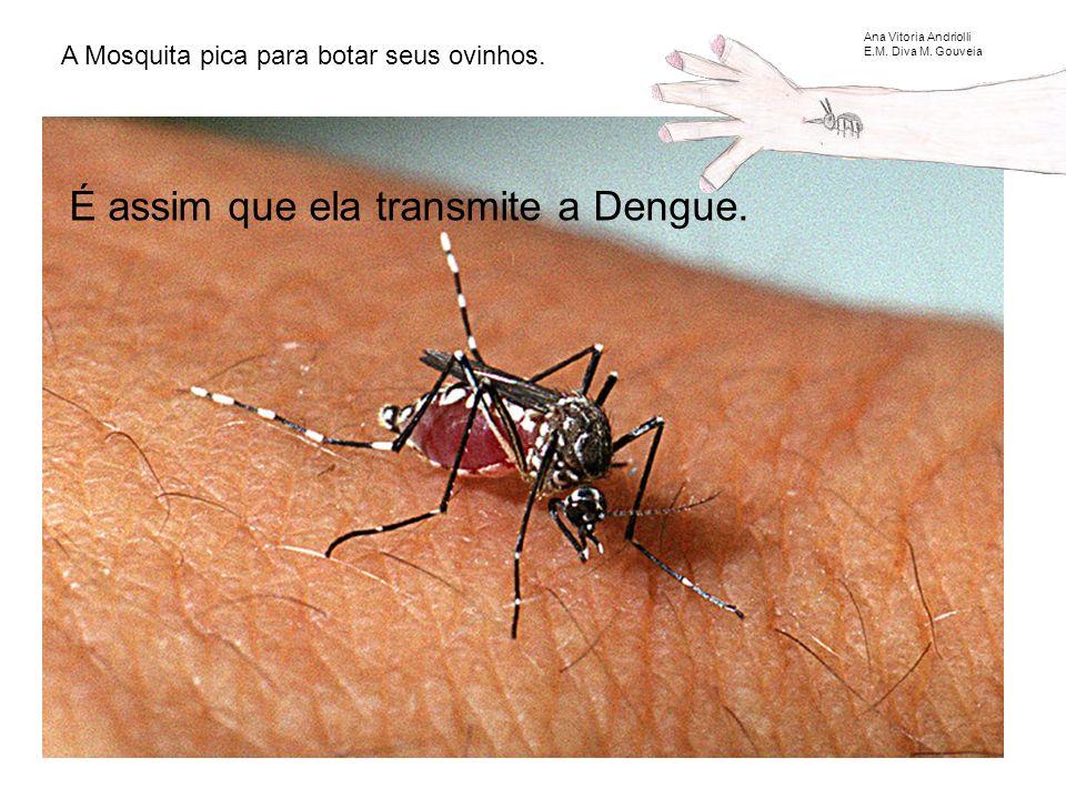 É assim que ela transmite a Dengue.