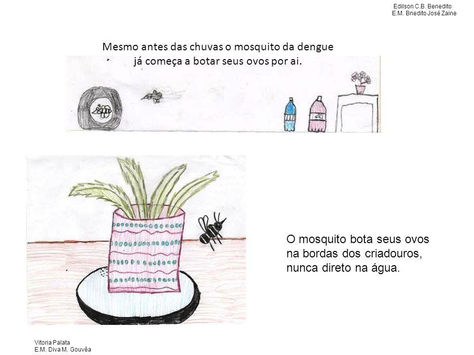 Mesmo antes das chuvas o mosquito da dengue