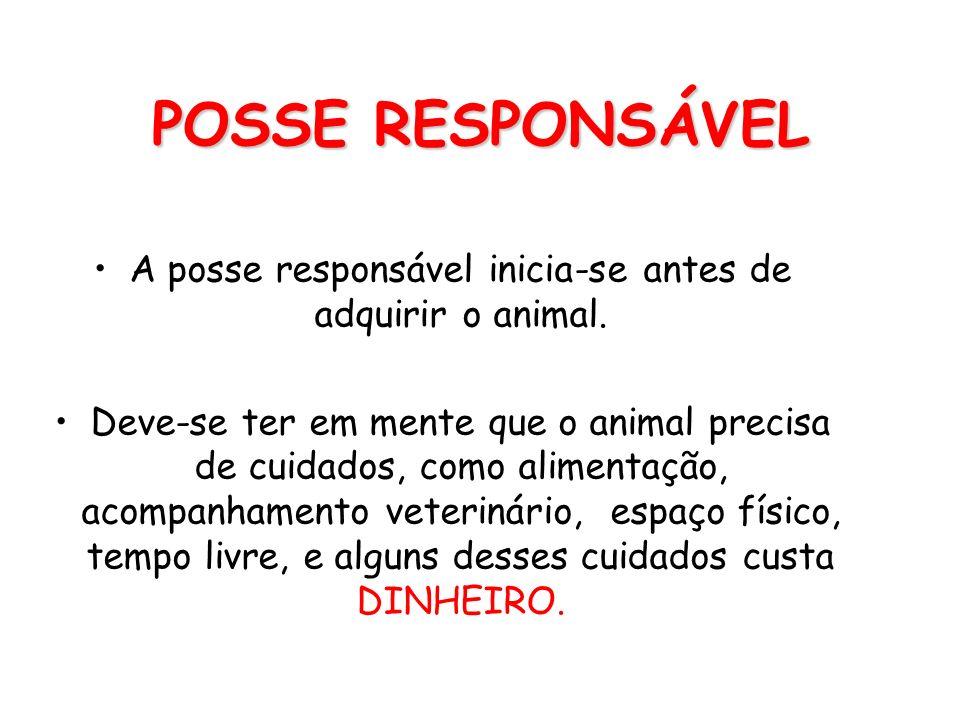 A posse responsável inicia-se antes de adquirir o animal.