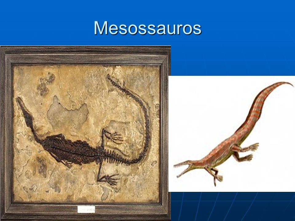 Mesossauros