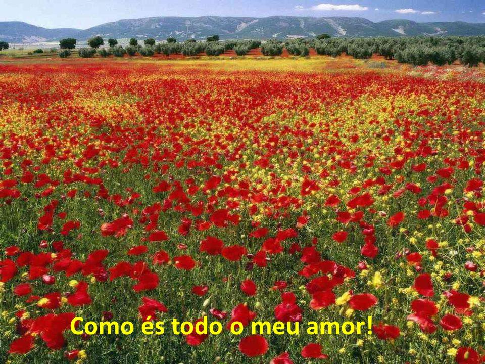 Como és todo o meu amor!