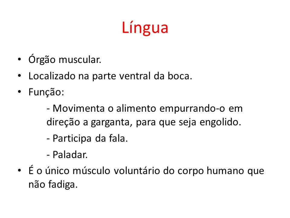 Língua Órgão muscular. Localizado na parte ventral da boca. Função: