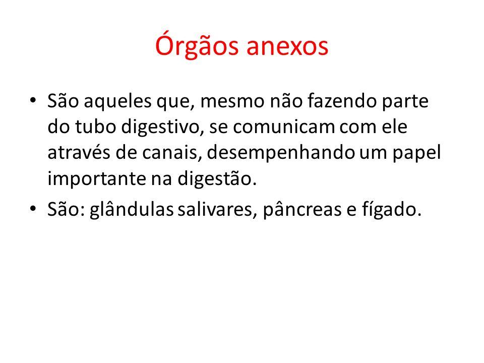 Órgãos anexos