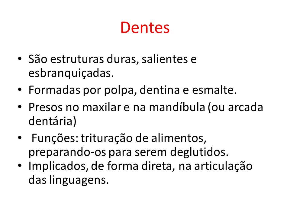 Dentes São estruturas duras, salientes e esbranquiçadas.