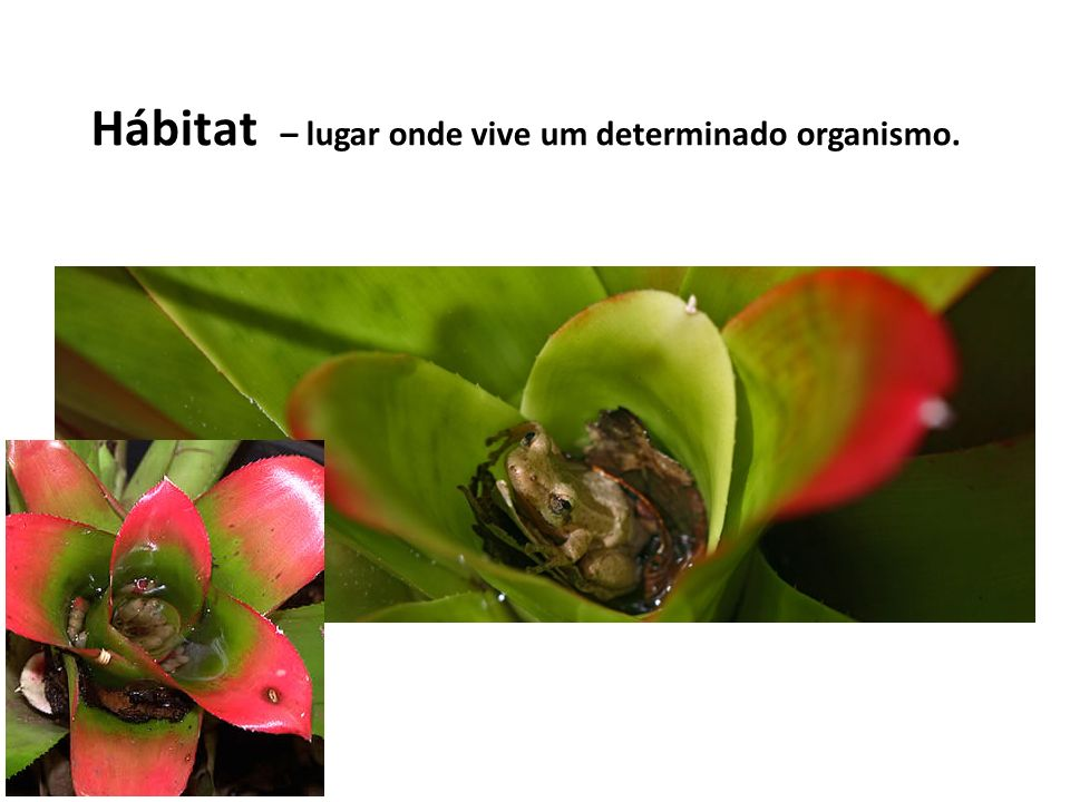 Hábitat – lugar onde vive um determinado organismo.