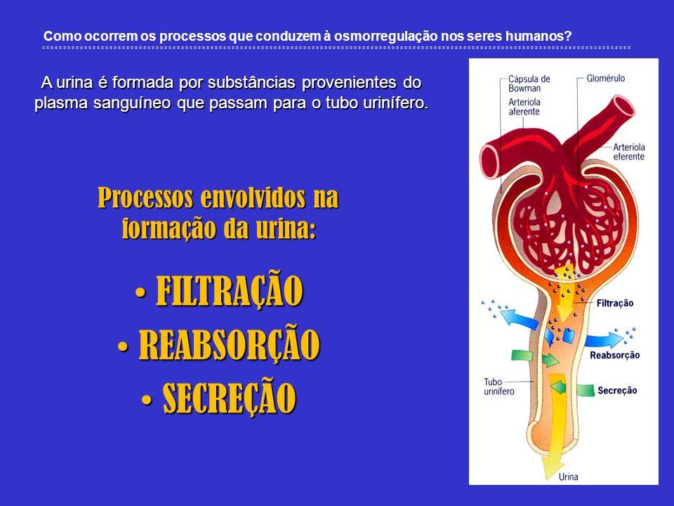 Processos envolvidos na formação da urina: