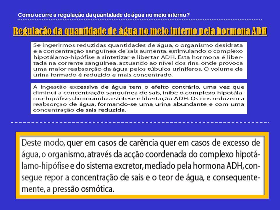 Regulação da quantidade de água no meio interno pela hormona ADH