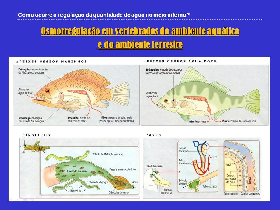 Osmorregulação em vertebrados do ambiente aquático