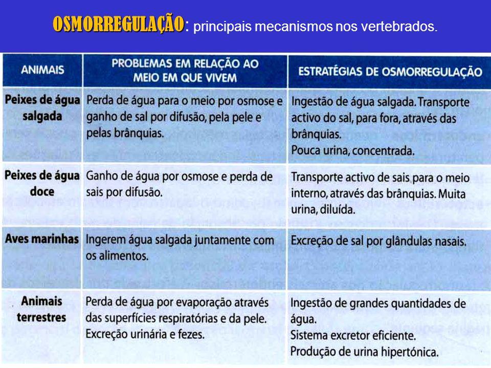 OSMORREGULAÇÃO: principais mecanismos nos vertebrados.