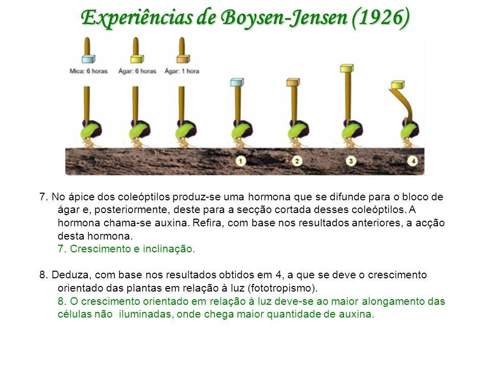 Experiências de Boysen-Jensen (1926)