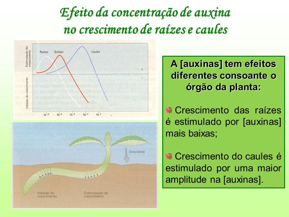 Efeito da concentração de auxina no crescimento de raízes e caules