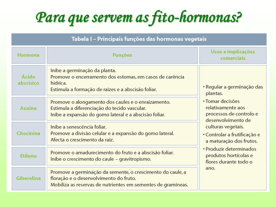Para que servem as fito-hormonas