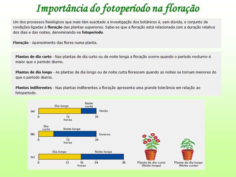 Importância do fotoperíodo na floração