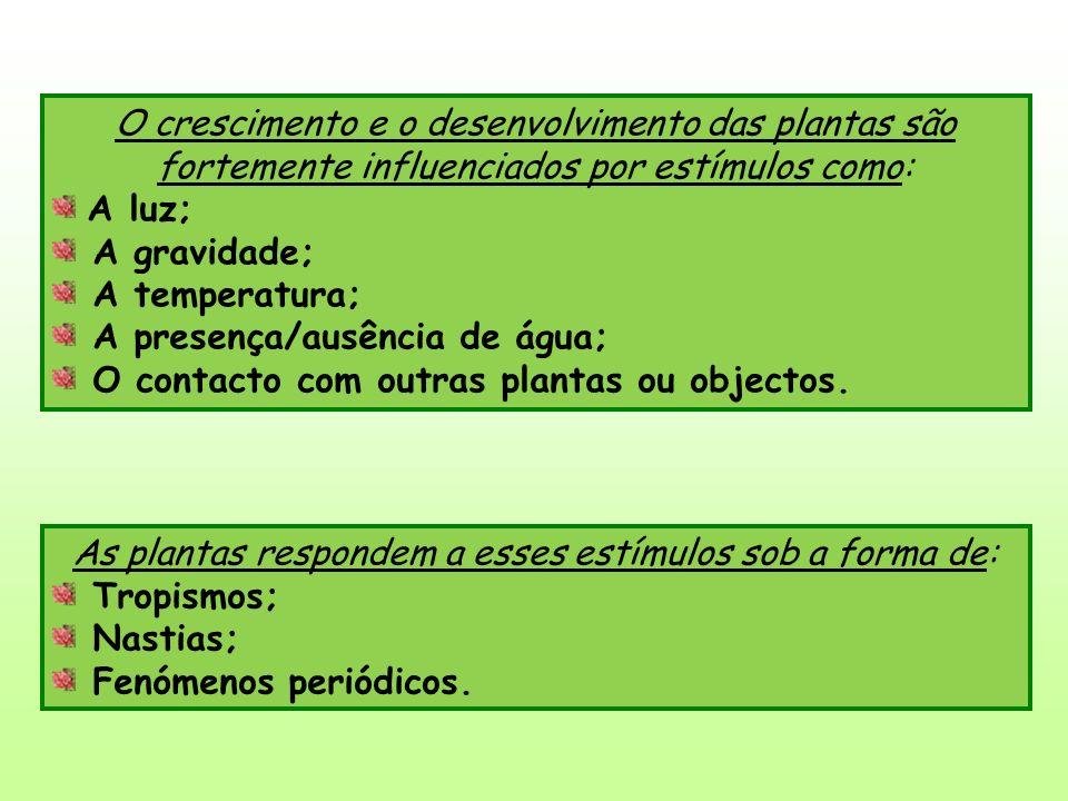O crescimento e o desenvolvimento das plantas são