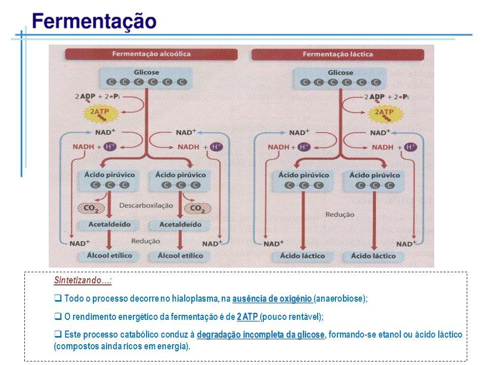 Sintetizando…:Todo o processo decorre no hialoplasma, na ausência de oxigénio (anaerobiose);