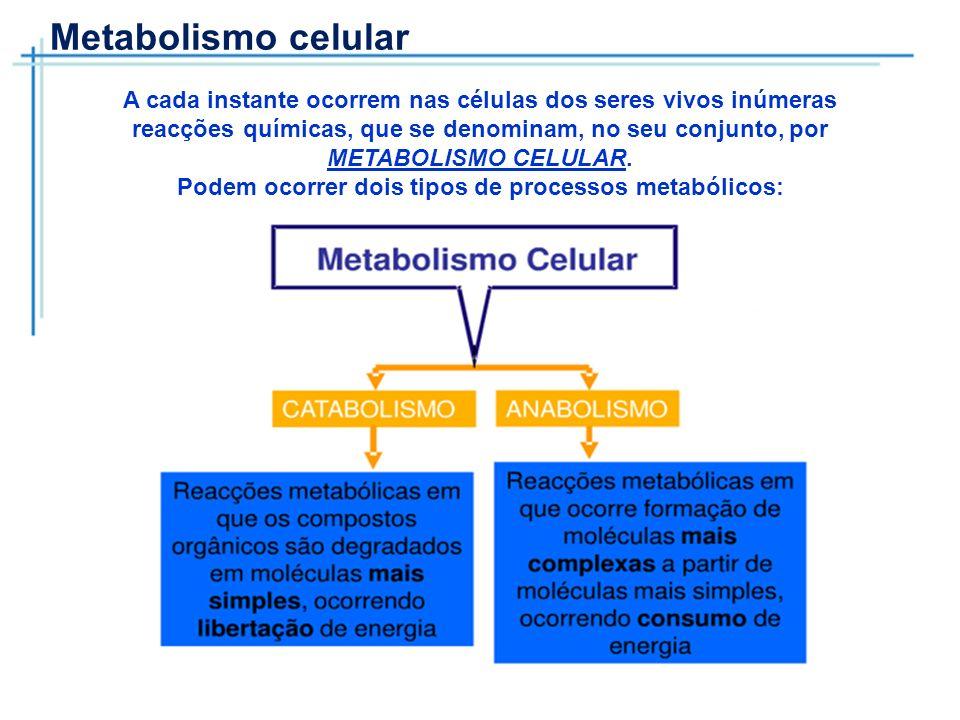 Podem ocorrer dois tipos de processos metabólicos: