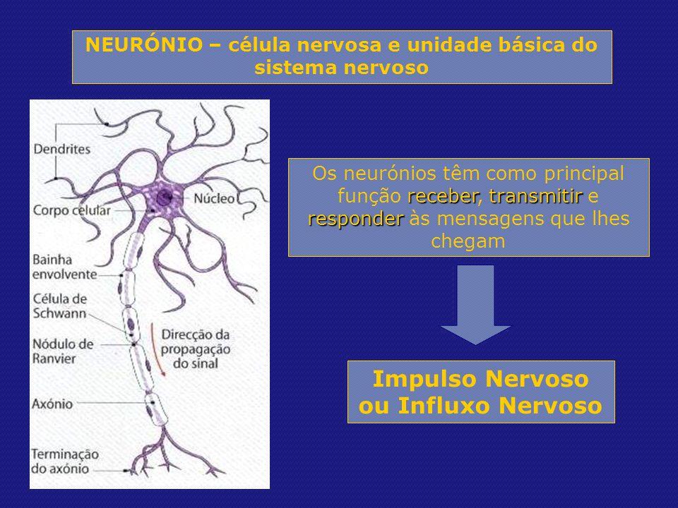 Impulso Nervoso ou Influxo Nervoso