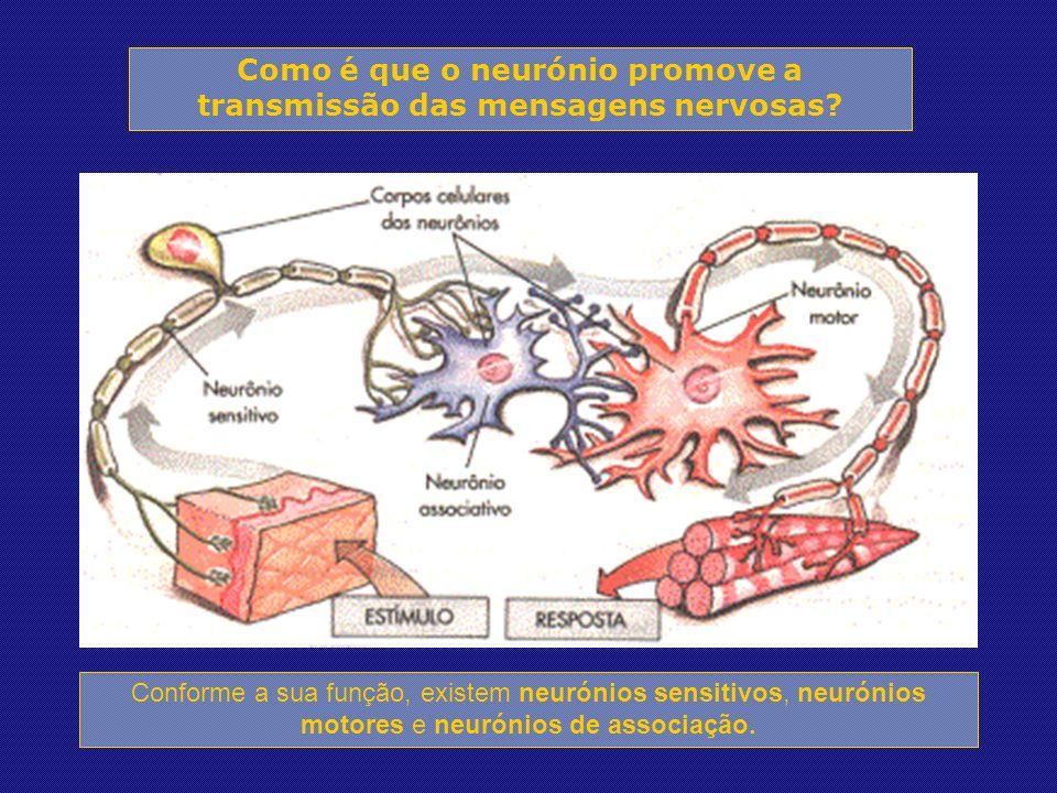 Como é que o neurónio promove a transmissão das mensagens nervosas