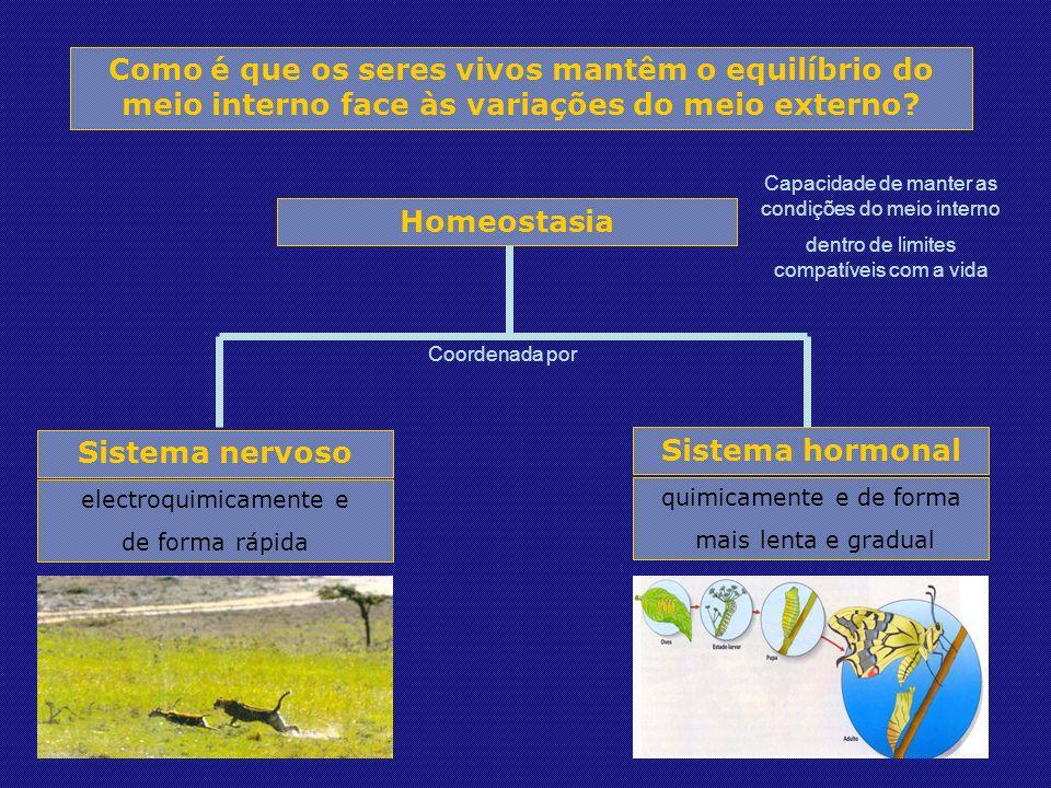 Como é que os seres vivos mantêm o equilíbrio do meio interno face às variações do meio externo