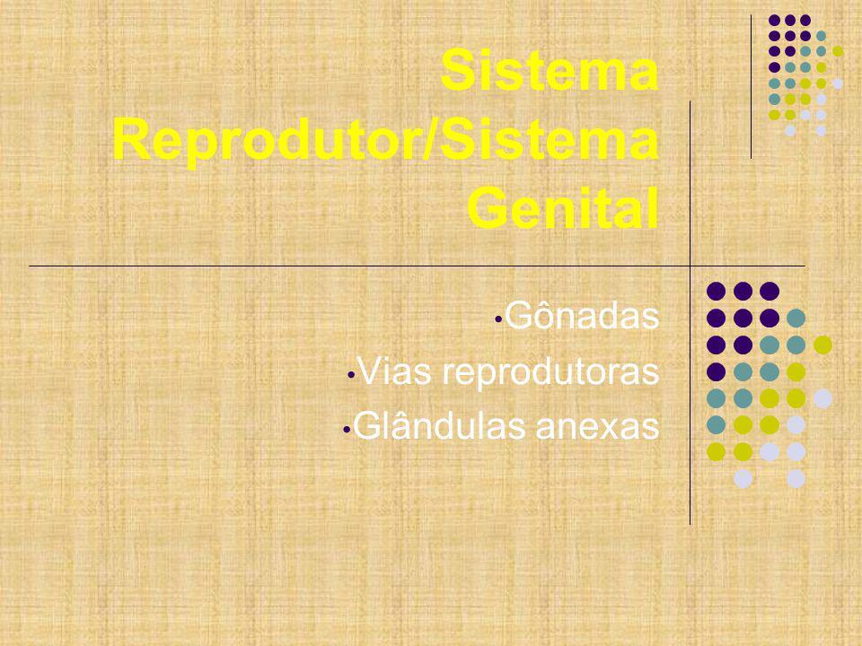 Sistema Reprodutor/Sistema Genital