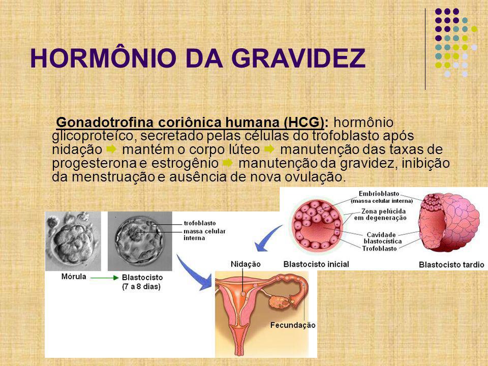 HORMÔNIO DA GRAVIDEZ