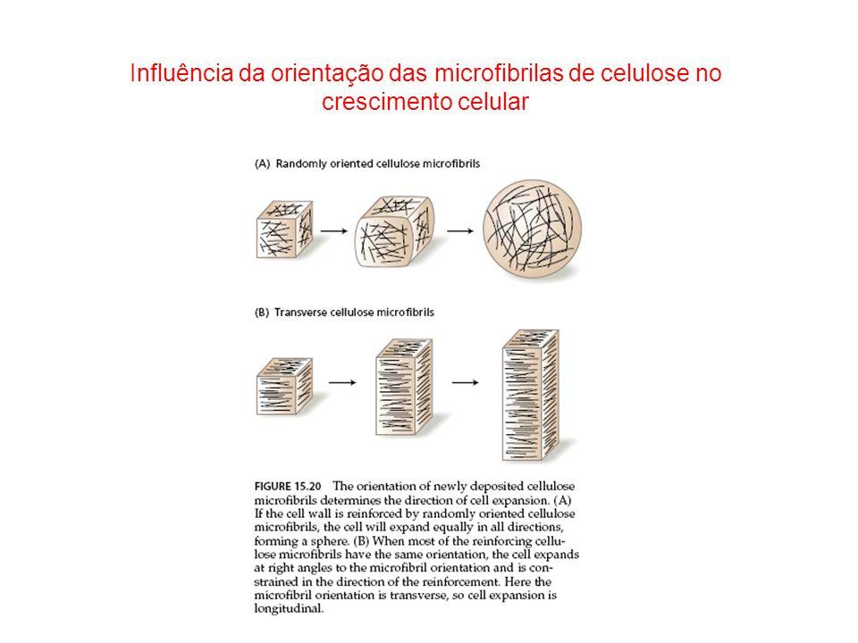 Influência da orientação das microfibrilas de celulose no