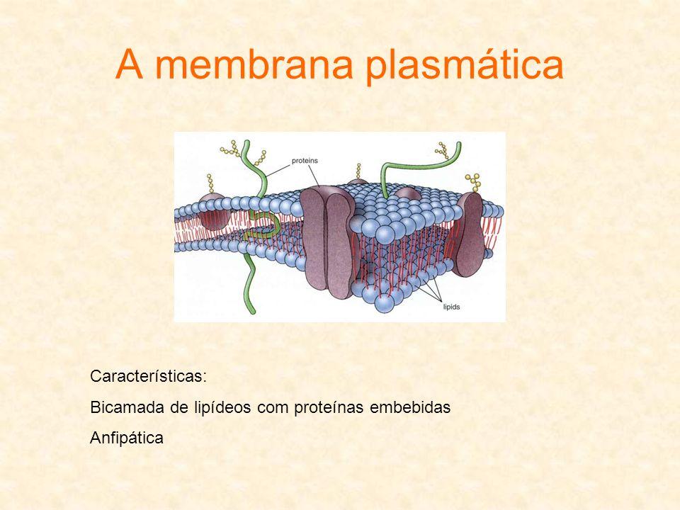 A membrana plasmática Características:
