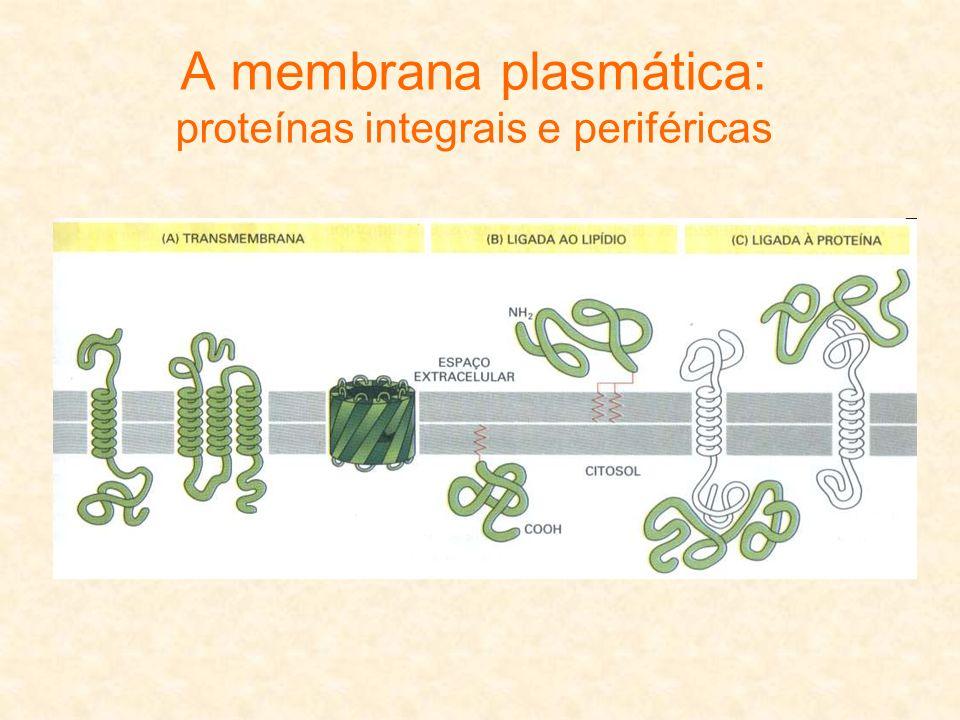 A membrana plasmática: proteínas integrais e periféricas