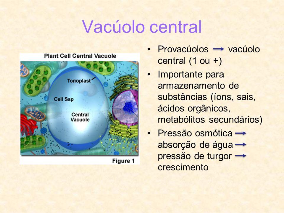Vacúolo central Provacúolos vacúolo central (1 ou +)