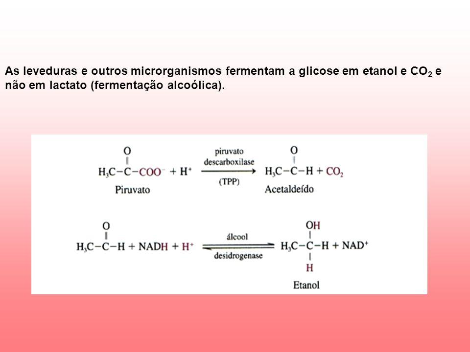 As leveduras e outros microrganismos fermentam a glicose em etanol e CO2 e não em lactato (fermentação alcoólica).