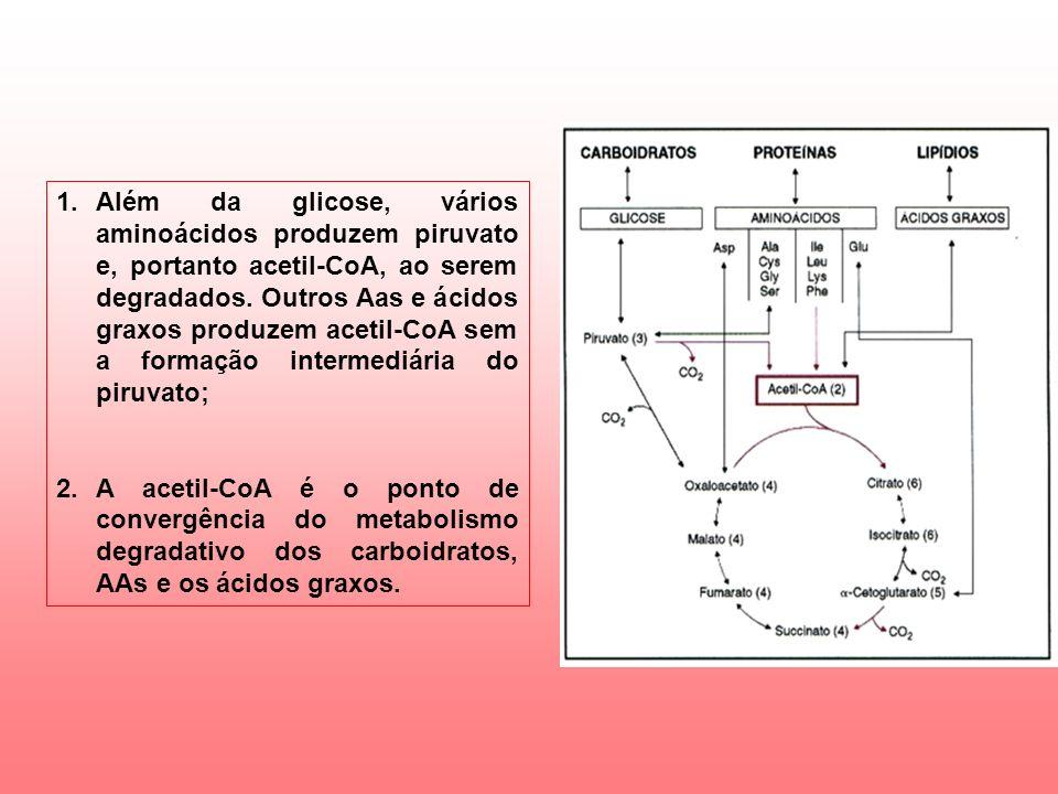 Além da glicose, vários aminoácidos produzem piruvato e, portanto acetil-CoA, ao serem degradados. Outros Aas e ácidos graxos produzem acetil-CoA sem a formação intermediária do piruvato;