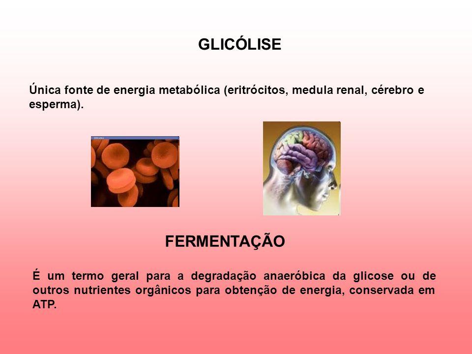 GLICÓLISE FERMENTAÇÃO