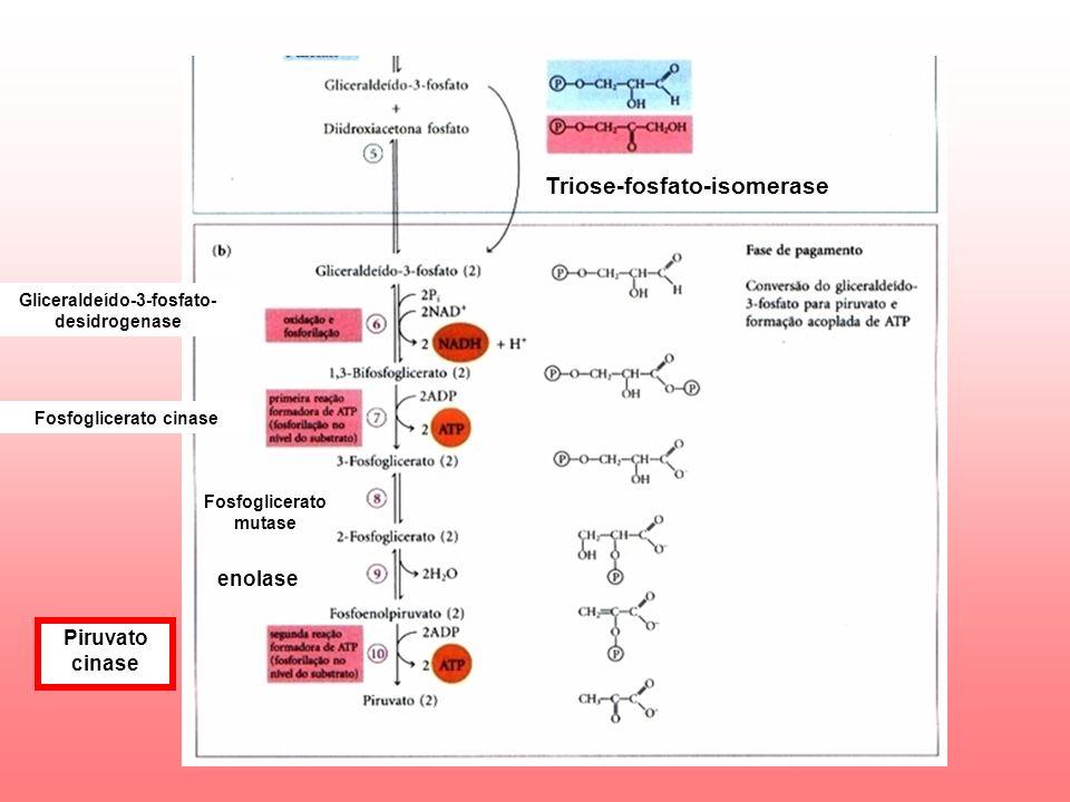 Triose-fosfato-isomerase