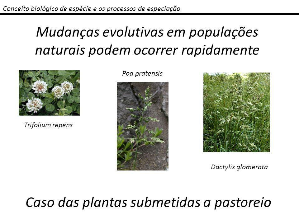 Mudanças evolutivas em populações naturais podem ocorrer rapidamente