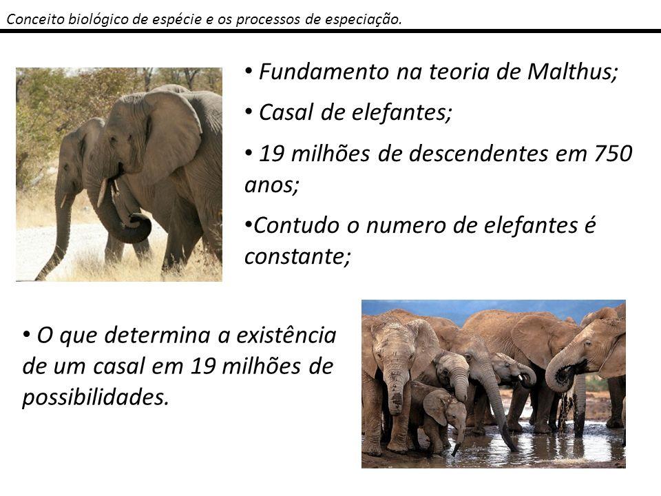 Fundamento na teoria de Malthus; Casal de elefantes;