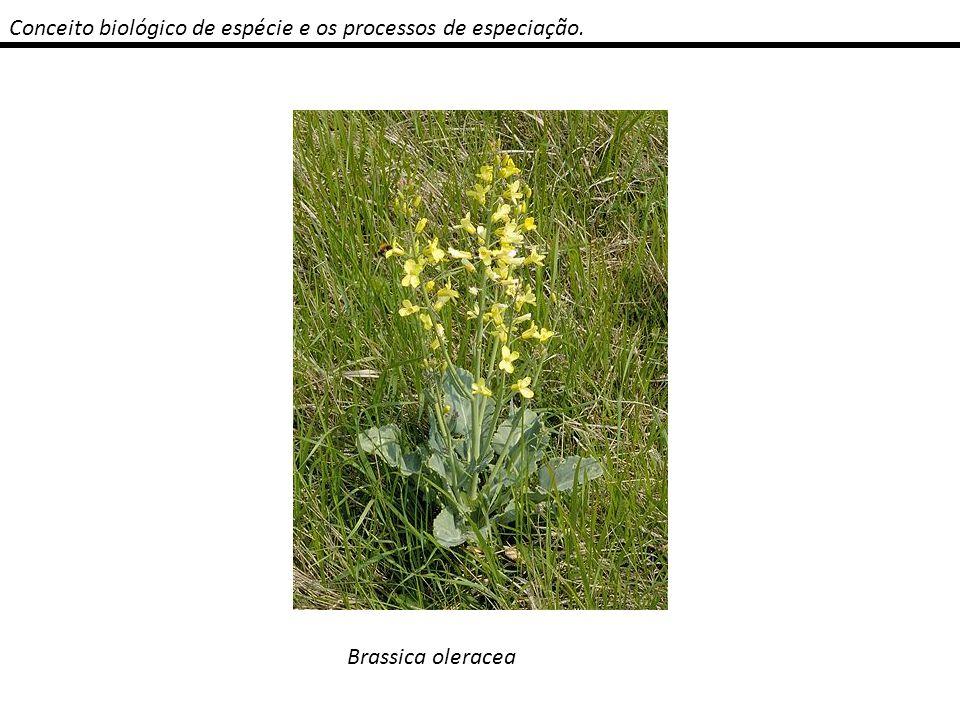 Conceito biológico de espécie e os processos de especiação.