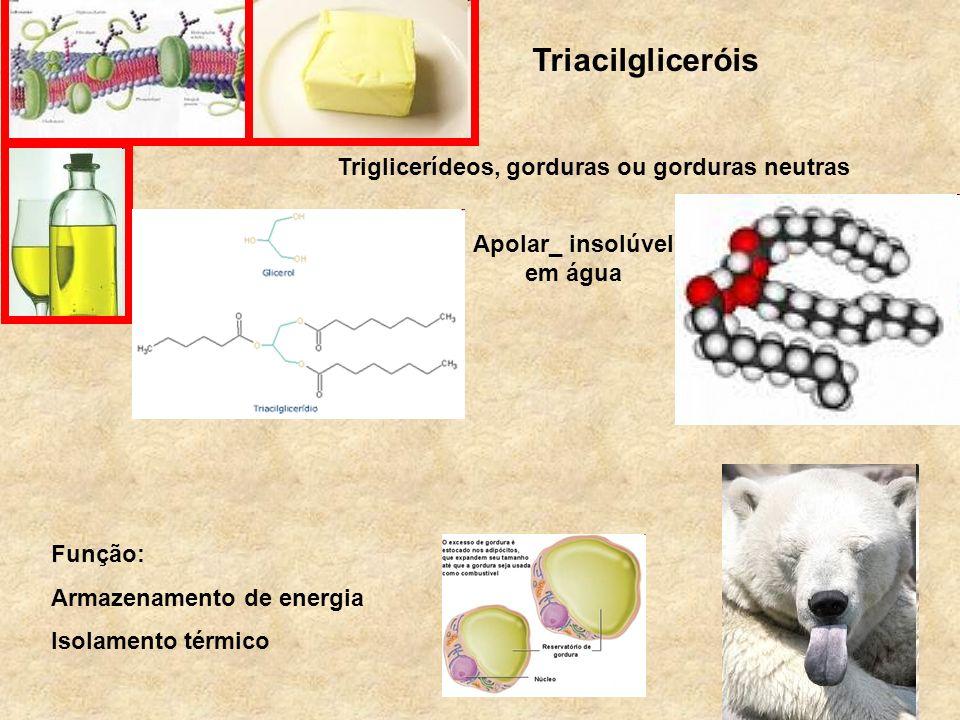 Triglicerídeos, gorduras ou gorduras neutras Apolar_ insolúvel em água