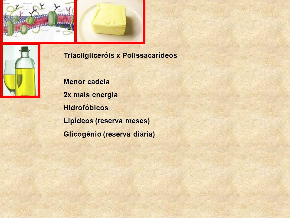 Triacilgliceróis x Polissacarídeos