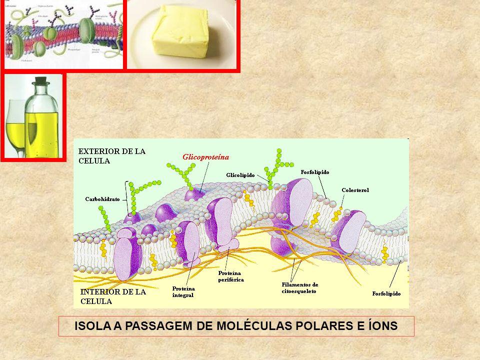 ISOLA A PASSAGEM DE MOLÉCULAS POLARES E ÍONS